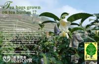 Tea bags grown on tea bushes?!